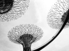 LG G2 Photos Taken By Aik Beng Chia (5)