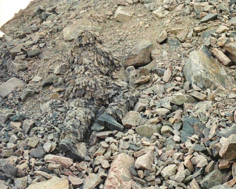 20 Photos of Human Camouflage – Mind Bomb #023   OKJ ...