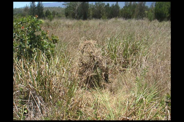 Soldier Camouflage Grass (Credit: the Brigade)