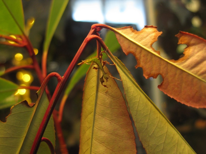 Stick Insect Colourful Camouflage
