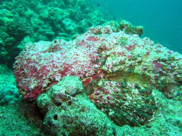 Stonefish Camouflage