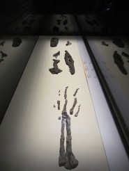Dawn-to-Extinction-Exhibits-2