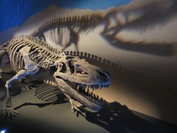 Dawn-to-Extinction-Exhibits-4