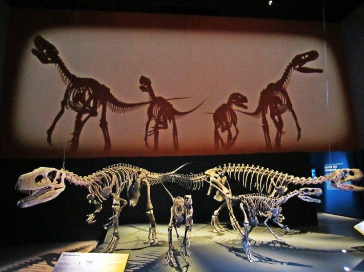 Dinosaur-dawn-to-extinction-introduction