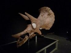 Titans-of-the-past-exhibits (2)