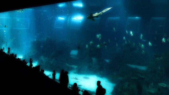 marine-life-ark-open-ocean-habitat